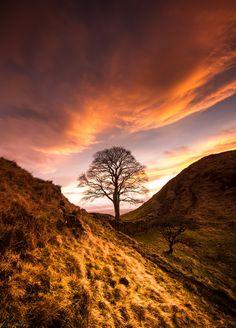 Sycamore Gap | Hadrian's Wall | Northumberland | England | Photo By Anita Nicholson