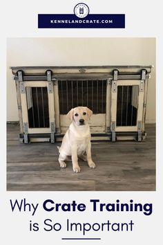 In-crate training is essential for dogs. It keeps them stress-free, this is for you also. The dog will learn to respond to your commands. When the dog lives in a designer dog crate without any worry, it stays happy. What more in-crate training can do to your dog? See our infographic for details. Puppy Kennel, Diy Dog Kennel, Custom Dog Kennel, Luxury Dog Kennels, Wire Dog Crates, Crate Training, Dog Training, Dog Furniture, Outdoor Dog