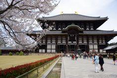 Cherry blossoms at Todaiji Temple in Nara. (April 2013)