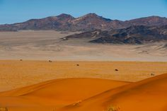 Holiday hotspots: where to go in 2015  - Namib desert - Africa