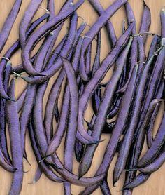 RAINBOW GARDEN - Beans (Purple King)