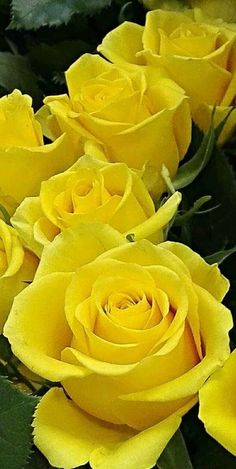 Roses and Love - Community - Google+