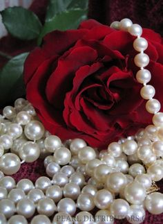 #Pearl necklaces and red rose