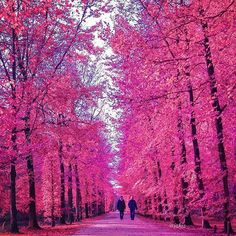 Tag who you'd walk with  Check out ✨@izkiz✨ & ✨@deluxefx✨ for stunning colorful posts!!! Loc: Holland.