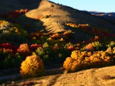 City Creek fall colors 2013, Pocatello Idaho