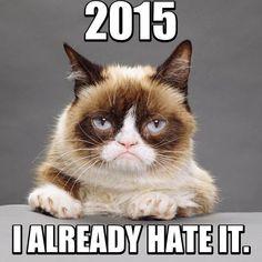 #grumpy #cat #new #year #2015