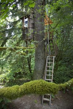 Treehouse by Pete Nelson, star of the forthcoming Animal Planet series Treehouse Masters