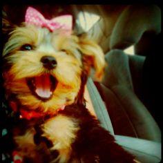 Baxter needs a girlfriend!!!