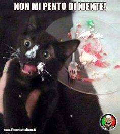 vignetta divertente gatto torta