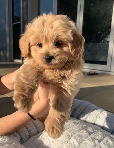 Super Cute Puppies, Cute Baby Dogs, Cute Little Puppies, Cute Dogs And Puppies, Cute Little Animals, Cute Funny Animals, Cute Babies, Doggies, Pets 3