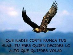face to face tv fausto ant rodriguez Nicolas Vanier, Spanish Quotes, Bald Eagle, Favorite Quotes, Wisdom, Motivation, Sayings, Tv, My Love