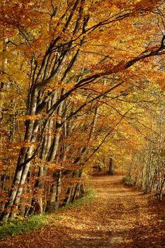 Autumn lane