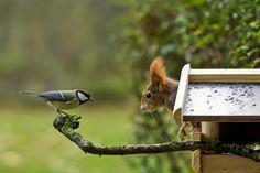 Wohnungsnot von Christian Kühn  #fotografie #photography #animals #tiere