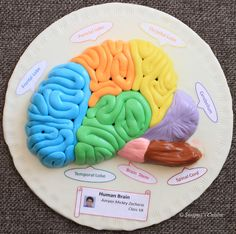 Model of Human Brain with Fondant