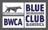 Blue  Weimaraner