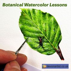 Botanical watercolor lessons, learn to paint realistic leaves, flowers, fruits & more! My video tutorials take you stage by stage through a painting. I'm not a jargon person, so I give you easy to follow instructions and plenty of close up video footage to guide you all the way. #PaulHopkinson #TheDevonArtist #LeafPainting #howtopaintleaves #howtopaintaleaf #botanicalpainting #illustrationart #watercolorlessons #watercolorvideos #videotutorial #watercolourpainting