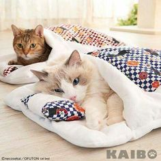 We are ready for snow-day..., it will be a looong nap-day #catandkittens