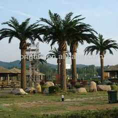 #Outdoor artificial palm trees, #outdoor building projection, #artificial palm trees