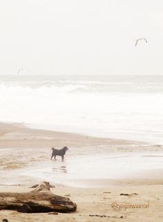 Dog at the beach #beaconhouseinn #petfriendlytravel