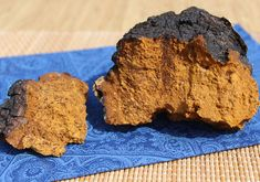 Chaga Mushroom Benefits  as an Immune Supporting Superfood    Chaga, Inonotus obliquus, is a rather unusual looking medicinal mushroom species that's not your typically polypore but one that grows as a black sclerotium or conk on the side of living trees.    The birch tree, being its preferred tree of choice, is believed to hold the most nutritional elements needed for the mushroom's growth and condensed amount of beneficial myconutrients.