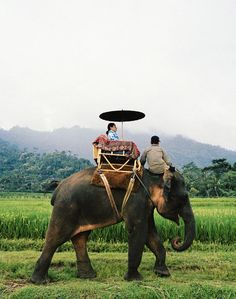 Elephant ride through rice fields in Indonesia / Frederic Lagrange Oh The Places You'll Go, Places To Travel, Places To Visit, Borneo, Laos, Vietnam, Elephant Ride, Le Havre, Adventure Is Out There