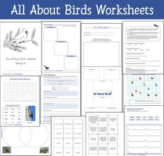 11 Exclusive  Worksheets and Printables included in the All About Birds Resource Packet - Word Search, Venn Diagram, Fascinating Facts, My State Bird, and more!