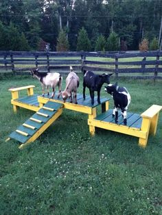 Miniature Breeds Of Cattle That Are Perfect For Small Farms Mini Goats, Cute Goats, Baby Goats, Hotel Pet, Goat Playground, Goat Shelter, Goat Pen, Miniature Cattle, Gardens