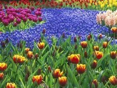 My Best Wallpapers: Keukenhof Gardens Lisse Holland Picture