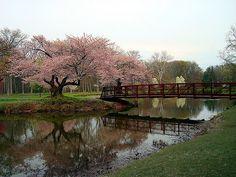 Nomahegan Bridge, Cranford NJ in Springtime