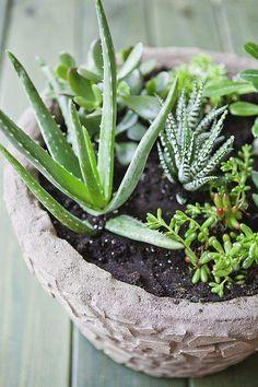 Succulent garden planter : one-color mosaic planter with directions. Succulent garden planter : one- Mosaic Planters, Mosaic Flower Pots, Mosaic Garden, Mosaic Vase, Outdoor Planters, Garden Planters, Succulents Garden, Mosaic Diy, Mosaic Ideas