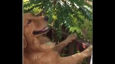 This dog is eating fruits which are till on the tree Eat Fruit, Dogs, Animals, Animales, Animaux, Pet Dogs, Doggies, Animal, Animais