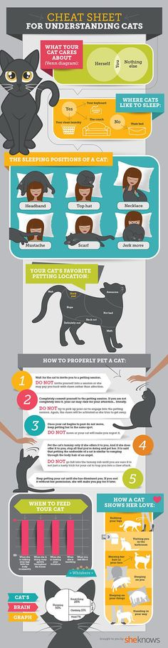 cat cheat sheet
