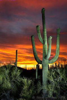 Saquaro NP with a Flashlight Art Inspo, Inspiration Art, Landscape Photography, Nature Photography, Desert Places, Vida Natural, Desert Art, Nature Wallpaper, Nature Pictures