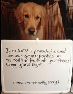 We sure know this doggy is not the one who got embarrassed!  #HappyAlert via @HappyHippoBilly