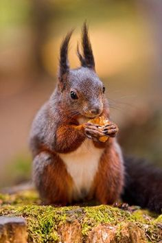 squirrel,