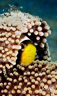 you didn't see me... (www.facebook.com/sipadanresort)