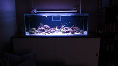 Best tanks from around the world. - Page 35 - Reef Central Online Community