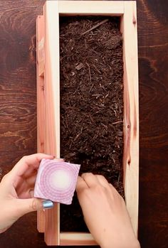 Instructions for the onion: | Here's How To Give Your Vegetable Scraps A New Life
