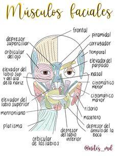 Medicine Notes, Medicine Student, Med Student, Student Studying, Studying Medicine, Dental Aesthetics, Nursing School Notes, Medical Anatomy, Bullet Journal School