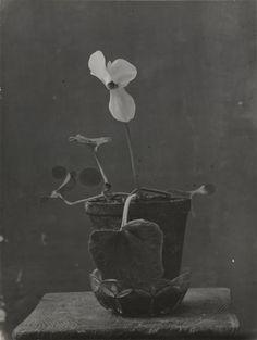 Constantin Brancusi on ArtStack - art online Still Life Photography, Art Photography, Flower Vases, Flower Arrangements, Constantin Brancusi, Ikebana, Planting Flowers, Photo Art, Sculptures