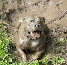 Happy and Muddy