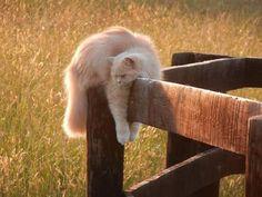 Lazing cat...