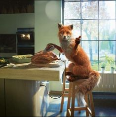 Fox Fantasy, Fuchs Illustration, Fox Pictures, Animals Amazing, Fox Art, Photographic Studio, Red Fox, Cute Funny Animals, Hanging Art