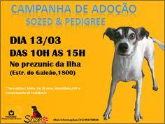 BONDE DA BARDOT: RJ: Sozed realiza campanha de adoção na Ilha do Governador, neste domingo (13/03)