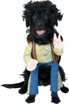 $15.43-$20.00 Hippie Dog Costume - Includes jumpsuit and headpiece.  Available in Pet sizes: Small, Medium, and Large. http://www.amazon.com/dp/B000Z9ZWZO/?tag=pin2pet-20
