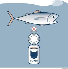 Thunfisch als Katzenfutter kann Katzen schaden (und Thunfischen sowieso).