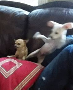 Wanna Fight