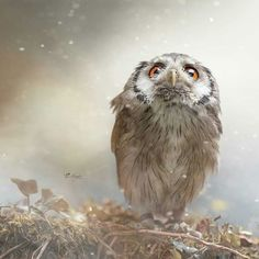 Beautiful Credit : @tanja_brandt -  Die Wärme eines Freundes empfindest du umso mehr  wenn du selbst oft genug gefroren hast.... (Can someone translate?) . .  For amazing owl photos and videos follow @owl.gifts #owl #owls #owllove