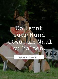 || #Hund || Ideen || #Hunde || Tipps || Tricks || Ideen || Liebe || Welpen || Bilder