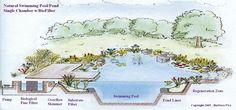 Natural Swimming Pool. Eco-Friendly